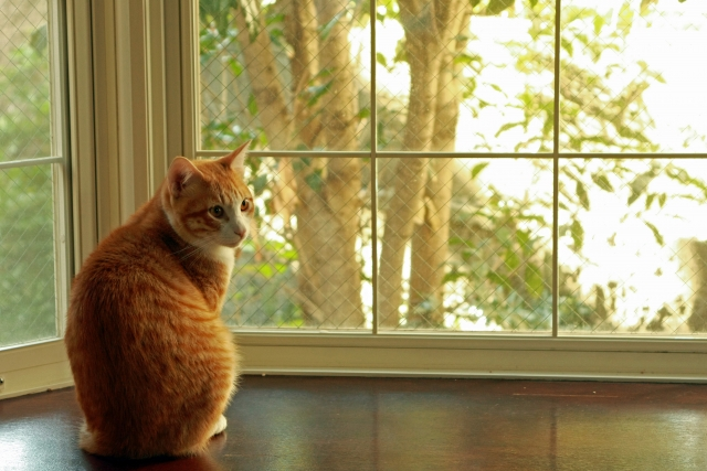 リビングの出窓を活かすおしゃれなインテリアの作り方とは
