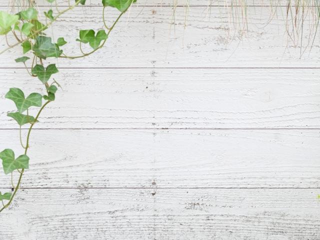 インテリアグリーンを壁掛けで飾ろう!おしゃれな雰囲気に