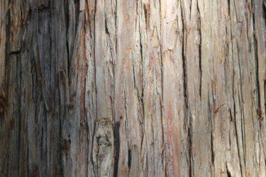 テーブルを新調したい!おすすめの木材はどれ?選び方は?